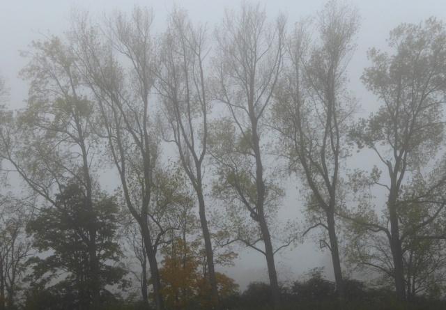 2015-10-28-Mist-starkborghkanaal-07